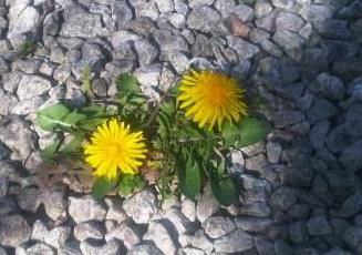 Natur setzt sich durch - Foto © Gerhard Hofmann, Agentur Zukunft - 20110409